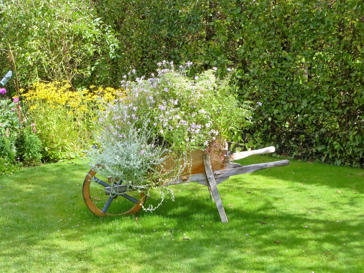 wheelbarrow_flowers_nature_gardening_gar
