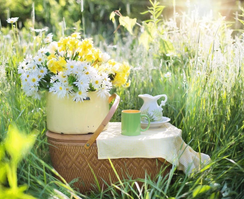daisies_summer_flowers_nature_green_bloo
