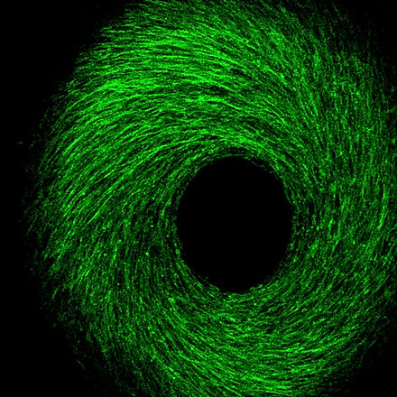 cell_spiral.jpg
