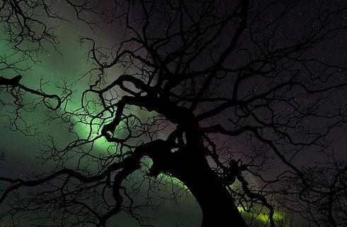 aurora-1979794_1280.jpg