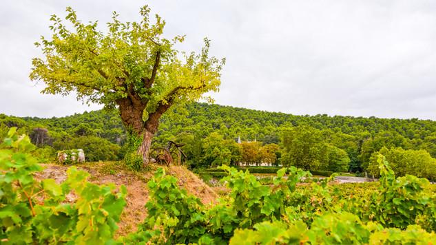 8-arbre_et_chateau- Version Ecran.jpg