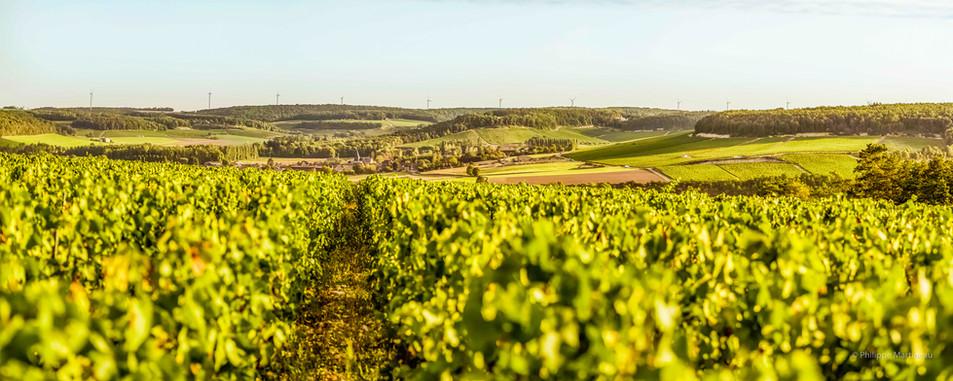 Pano-Pinot_Blanc_-_Ville-sur-Arce-2- Ver