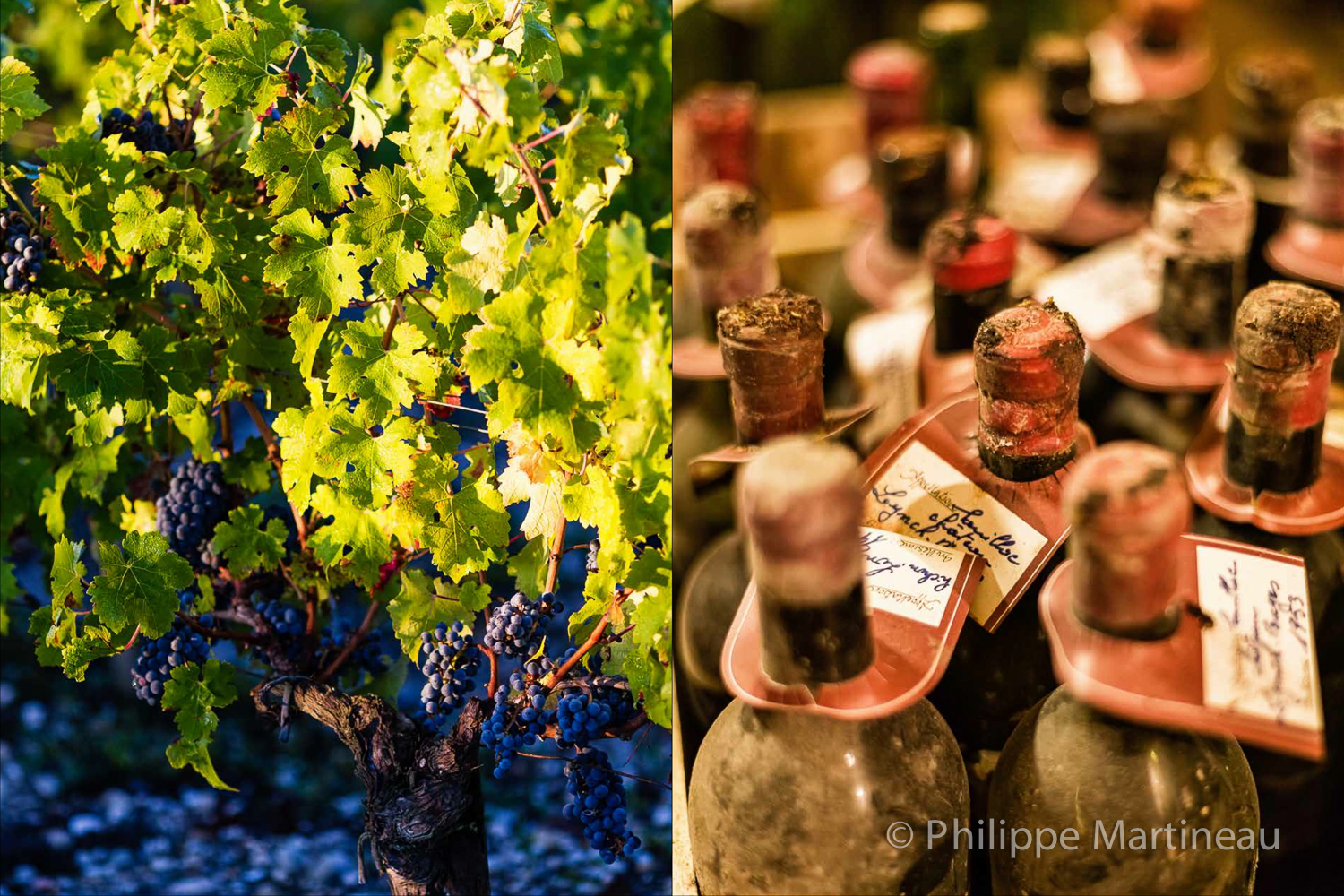 Lynch-Bages_-_complet_14.jpg