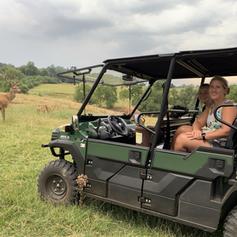 An English Safari