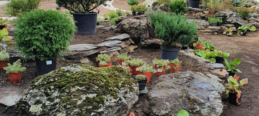 расстановка растений.jpg