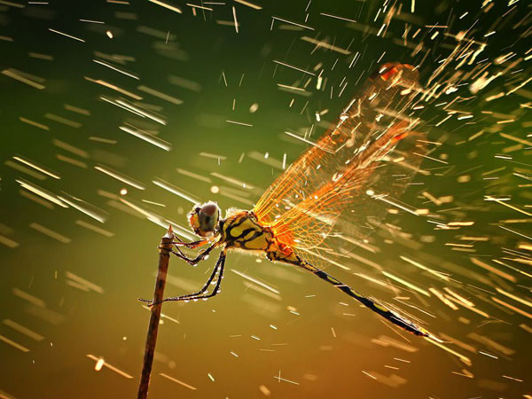 dragonfly-branch-rain__breathtaking-national-geographic-nature-wallpapers-hd.jpg