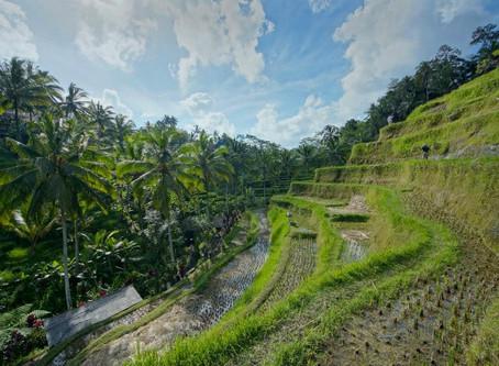 Indonesia - Bali vol.1 (World Trip Day 69)