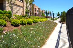 The Hill at Bricktown