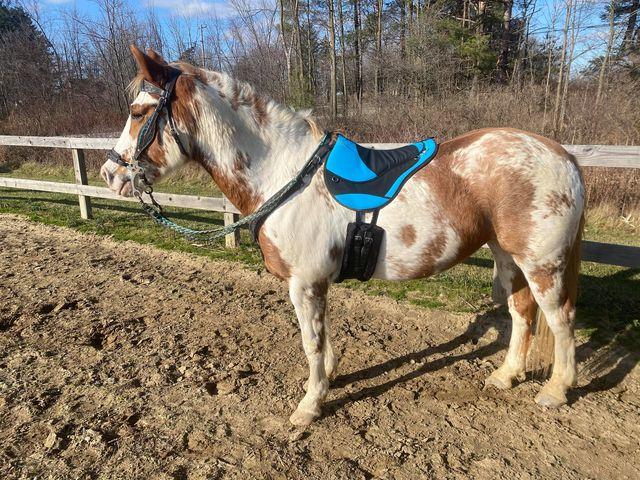 Customer horse bbp azure w bk