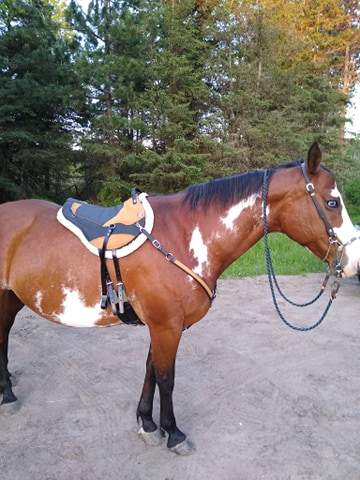 customer gauld horse w pad