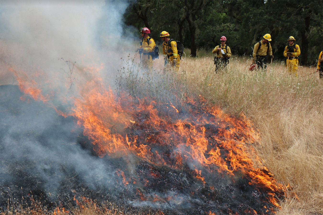 Controlled burning at Sonoma Valley Regional Park June 2019