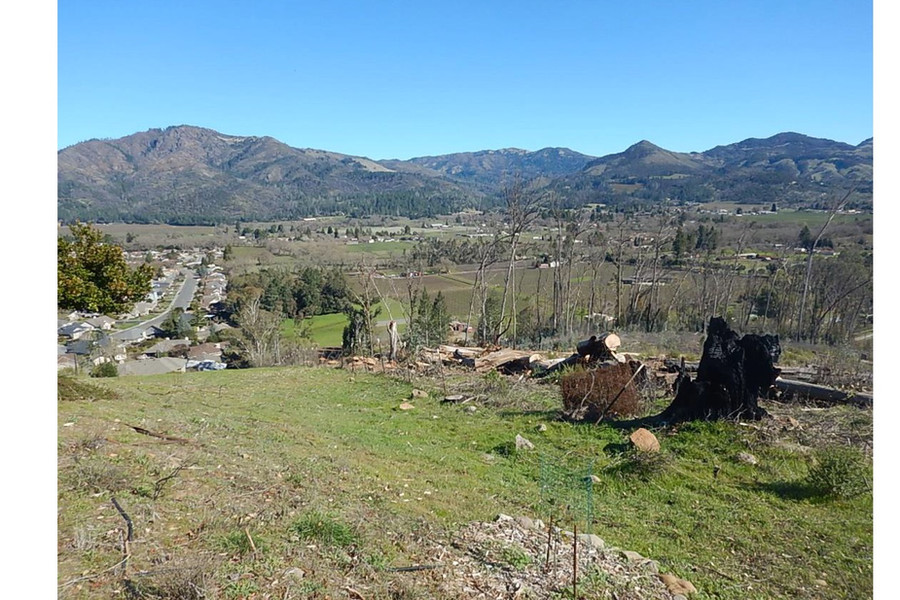 Trione Annadel State Park after hazarous trees removed