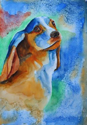 Keltainen koira, akvarelli 2019