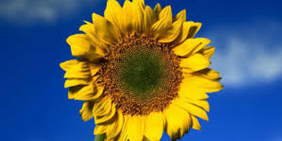 Sichtwechsel zur Sonnenseite - Die Kraft unserer Gedanken