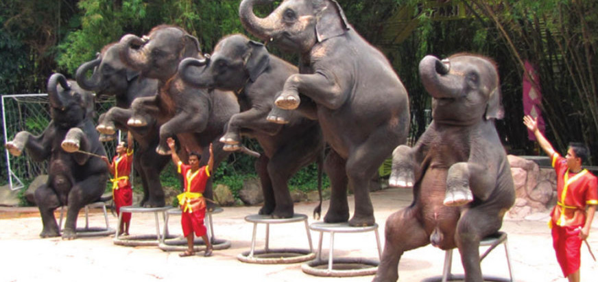 Ending Animal Abuse in the Growing Global Wildlife Tourism Industry