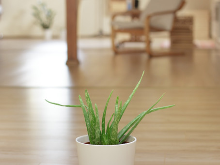 Indoor Plants Anyone Can Grow This Winter