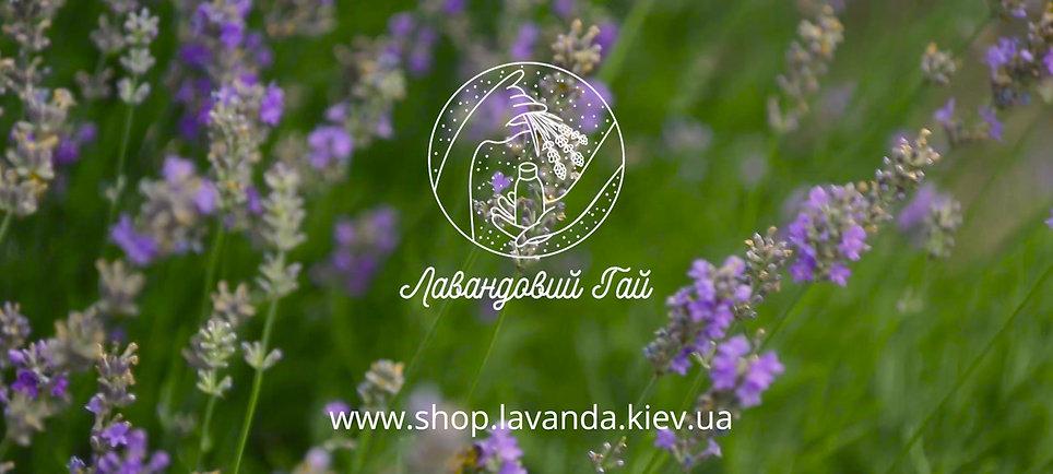 Збір та переробка лаванди в господарстві Лавандовий Гай