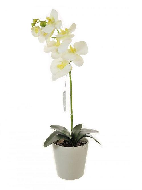 Single Stem Phalaenopsis Orchid Arrangement