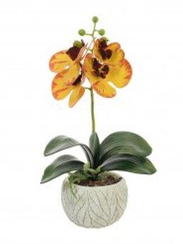Mini Phalaenopsis Orchid Arrangement