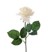 Rose - Open Ivory