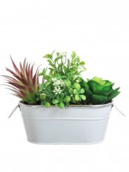Succulent 001 Arrangement