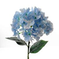 Hydrangea Baby Blue