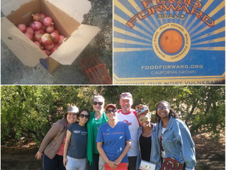 Our firm's volunteer day was last weekend. We picked #pomegranates with Food Forward. Grateful t