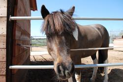 pddock ponis