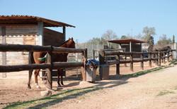 paddocks ponis