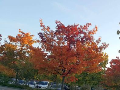 Autumn Winter Trends 2017