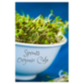 SproutsOrganicCafe.jpg