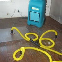 Water Damage and Mold Removal Professionals