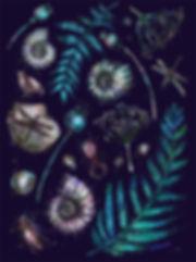 эзотерическая, морская картнка, ракушки, цветочки, веточки