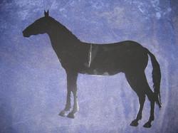 Individual Horse