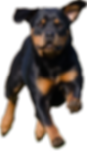 Image: Brown and black dog, running, with a pencil in the background
