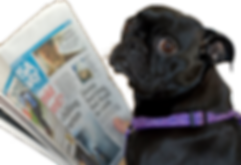"Image: Black pug holding a newspaper and looking confused, with a thought bubble reading ""Oxford comma?"""