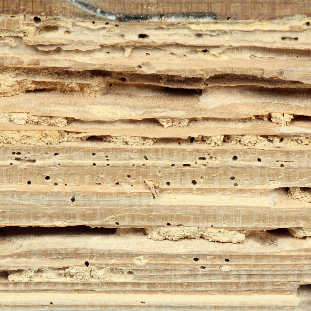termite-damage-wood-structural.jpg