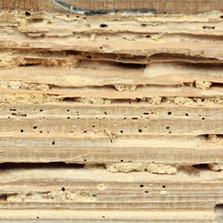 termite-damage-wood-structural.jpg