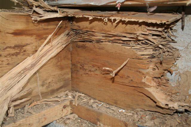 termite_damage.jpg