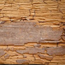 wood-damage-800a.jpg