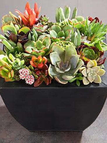 Cactus and succulent garden mixed
