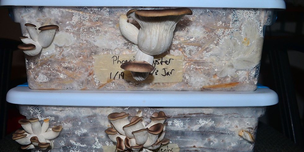 Mushroom Cultivation Workshop