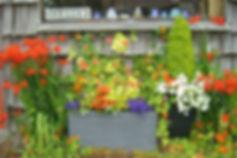 Cannon Beach Flowers (=