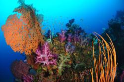 美しい伊豆の海