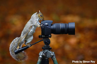 animals-cozy-with-camera-gear-squirrel__