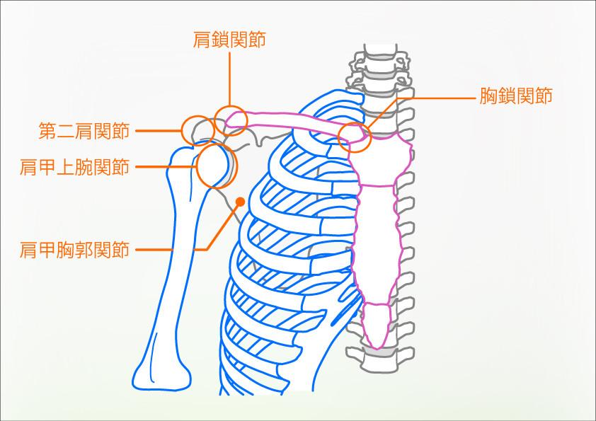 肩_胸郭の関節の名称