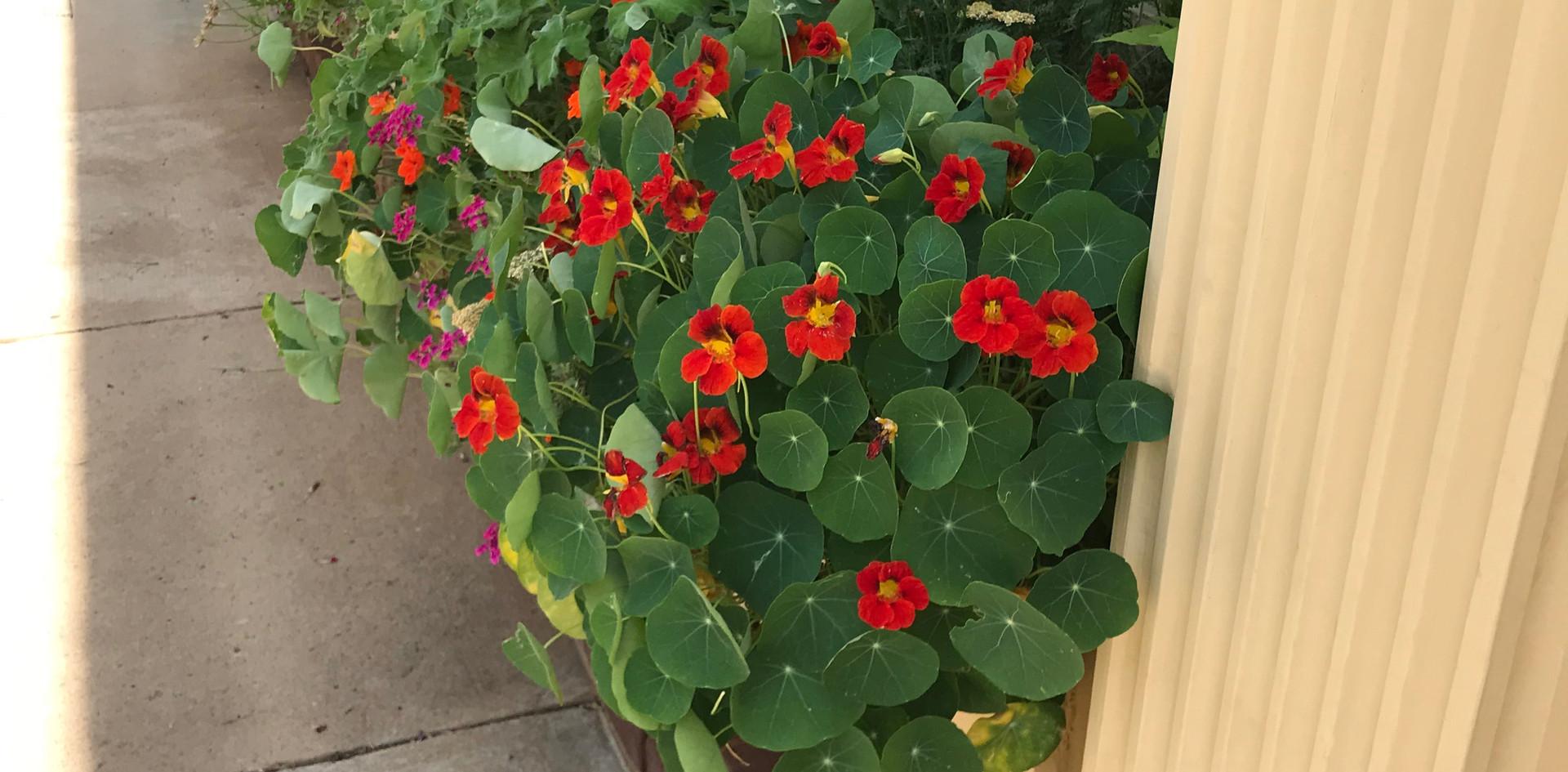 Pollinator Box