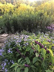 Pollinator Garden 9-20-2018.jpg