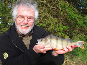 Daiwa consultant Brian Skoyles with a nice perch at Westerly Lake Fishing and Caravan Park York.