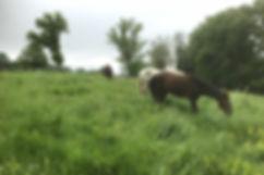 chevaux au paddock la journée